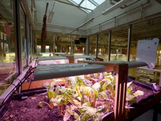 Burnaby Mountain Secondary Agriculture Lab