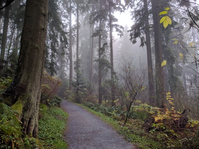 Burnaby Mountain Conservation Area Trails